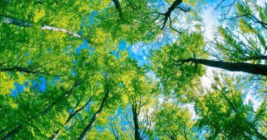 Solar Aydınlatma ve Doğa