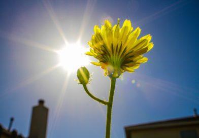 Neden Solar Aydınlatma