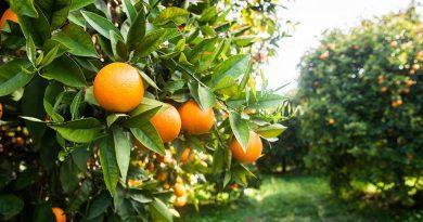 exotic-meyve-suyu-portakal