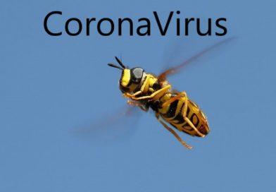 Propolis-ve-corona-virüsü
