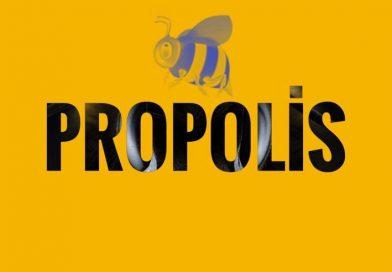 Propolis-koronavirüs'ün-hücre-içine-girmesini-engelleyebilir-mi-Solar-gezi-blog
