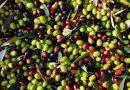 Polifenol nedir Zeytinyağı Hakkında Bilmeniz Gerekenler